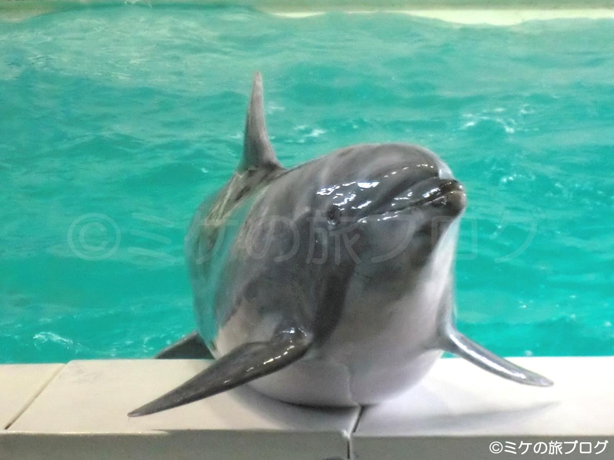 おたる水族館のイルカ